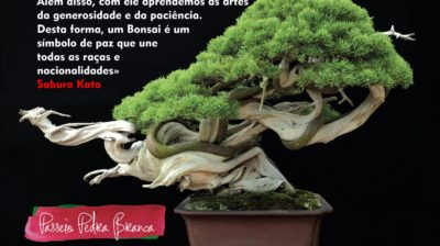 Primavera Garden Dia do Bonsai